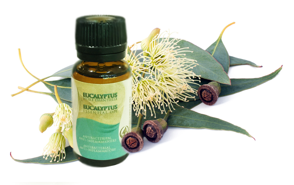 Eucalyptus Essential Oil For Natural Hair